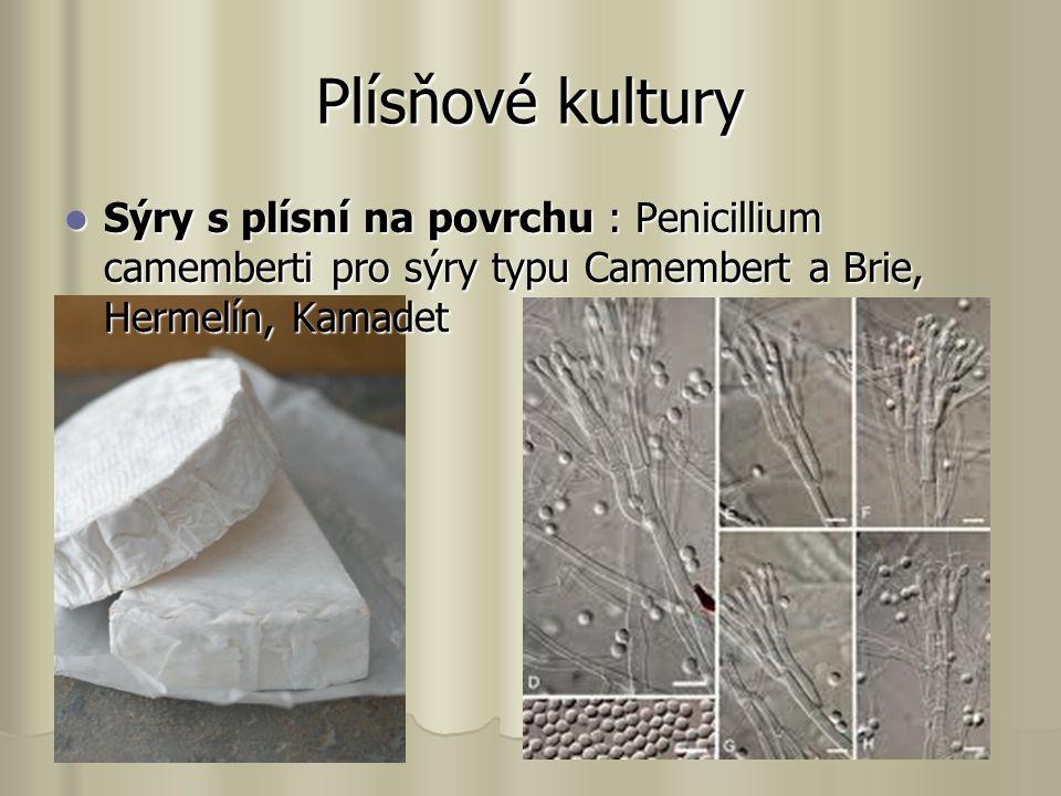 Plísňové kultury Sýry s plísní na povrchu : Penicillium camemberti pro sýry typu Camembert a Brie, Hermelín, Kamadet Sýry s plísní na povrchu : Penicillium camemberti pro sýry typu Camembert a Brie, Hermelín, Kamadet