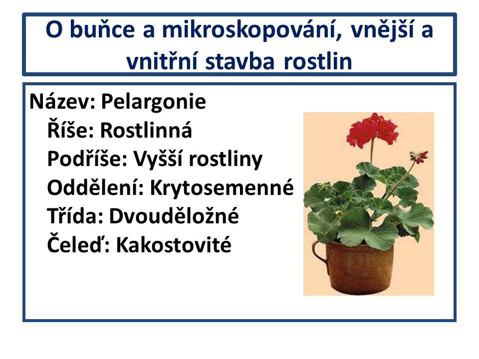 O buňce a mikroskopování, vnější a vnitřní stavba rostlin Název: Pelargonie Říše: Rostlinná Podříše: Vyšší rostliny Oddělení: Krytosemenné Třída: Dvou