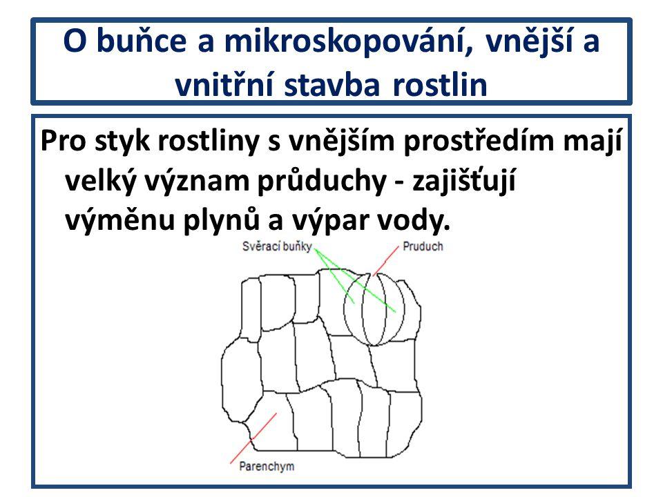 O buňce a mikroskopování, vnější a vnitřní stavba rostlin Průduchy jsou většinou na spodní straně, výjimkami jsou na vrchní nebo na obou stranách.