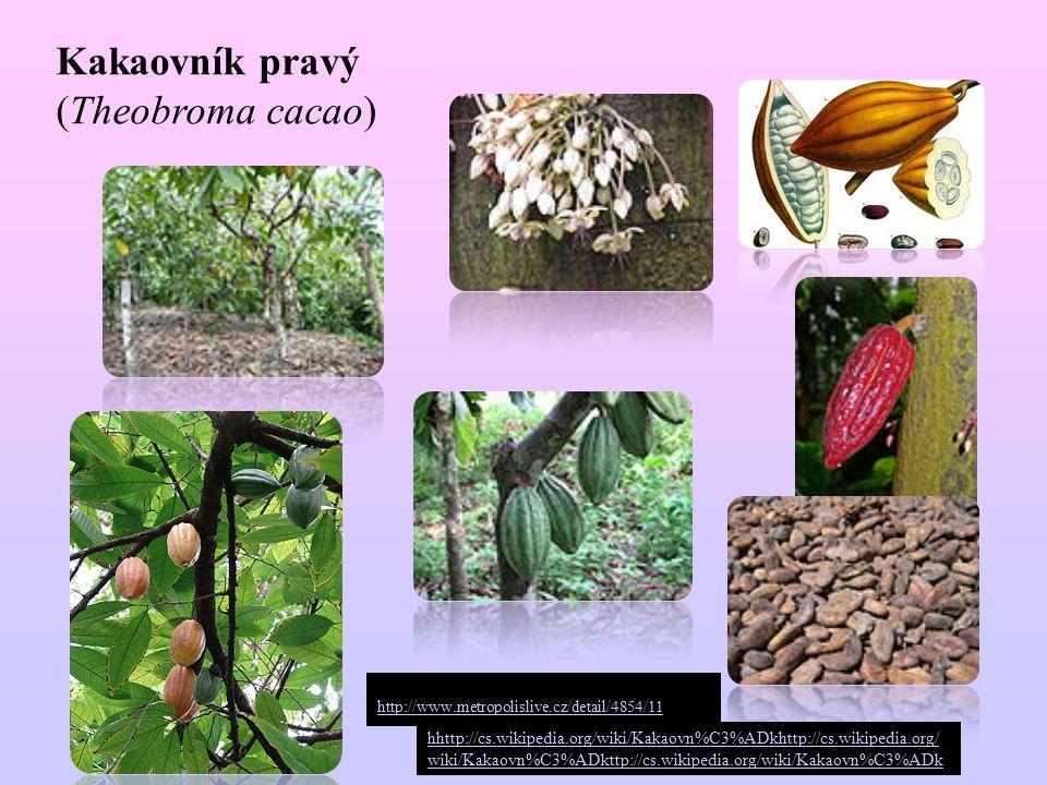 Kakaovník pravý (Theobroma cacao) hhttp://cs.wikipedia.org/wiki/Kakaovn%C3%ADkhttp://cs.wikipedia.org/ wiki/Kakaovn%C3%ADkttp://cs.wikipedia.org/wiki/