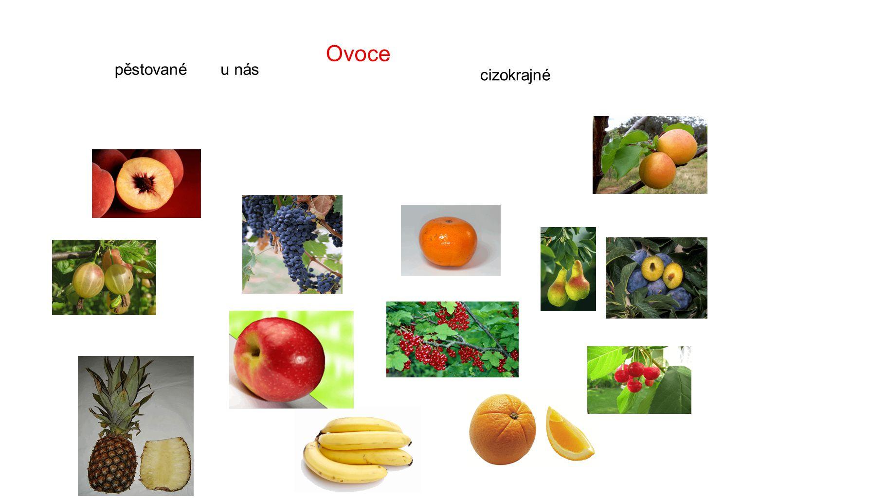 Ovoce pěstované cizokrajné u nás