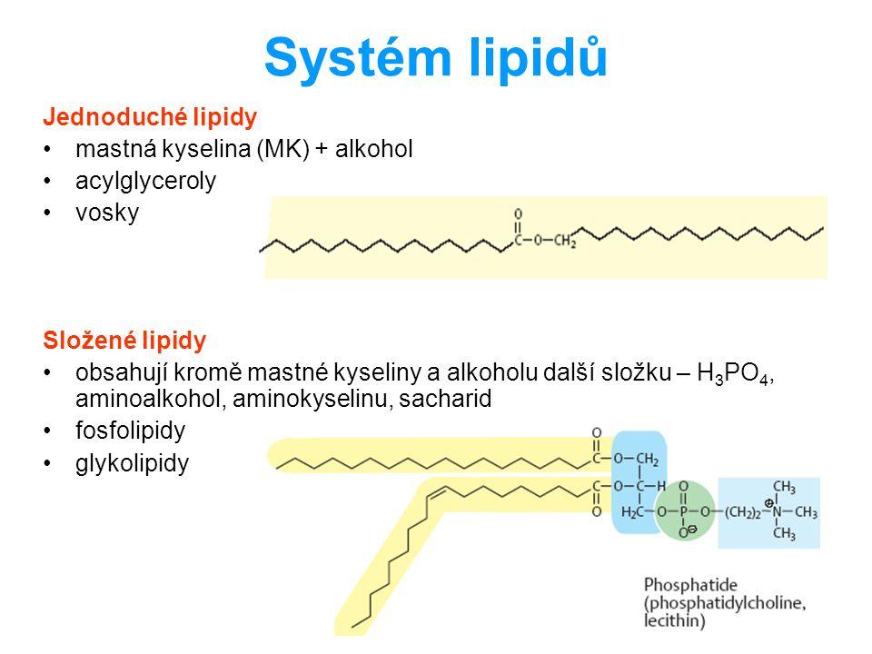 Mastné kyseliny sudý počet atomů C → syntetizovány acetyl-CoA nasycené x nenasycené (konfigurace cis) omezená schopnost desaturace: maximálně na devátém C + neprobíhá u kratších než 16C esenciální: ω6, ω3 laurová12:0 myristová 14:0 palmitová16:0 stearová18:0 olejová18:1; 9 linolová18:2; 9, 12 linolenová18:3; 9, 12, 15 arachidová20:0 arachidonová20:4; 5, 8, 11, 14