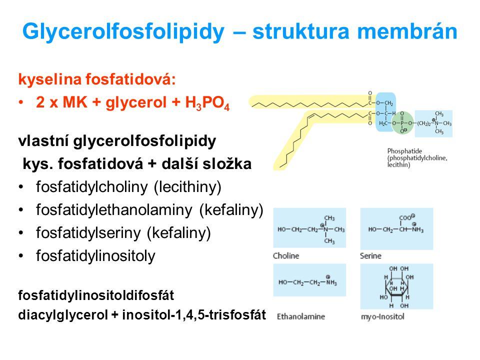 Sfingofosfolipidy alkohol sfingosin: C18, 2 x -OH, -NH 2 ceramid: MK + sfingosin (amidová vazba) jediná skupina - sfingomyeliny: ceramid + H 3 PO 4 + cholin myelinové pochvy