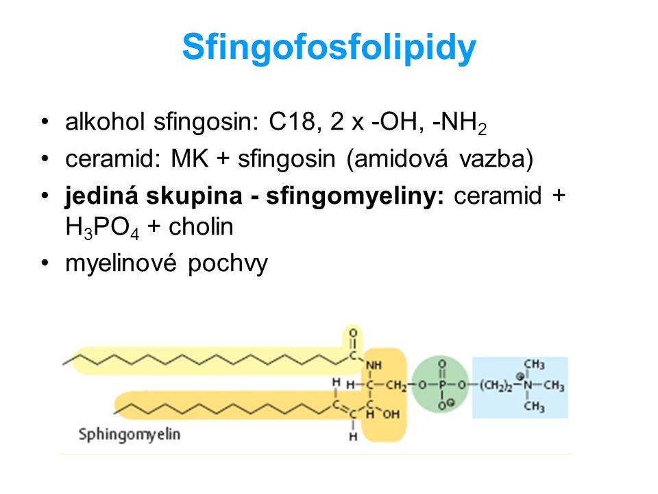 Sfingofosfolipidy alkohol sfingosin: C18, 2 x -OH, -NH 2 ceramid: MK + sfingosin (amidová vazba) jediná skupina - sfingomyeliny: ceramid + H 3 PO 4 +