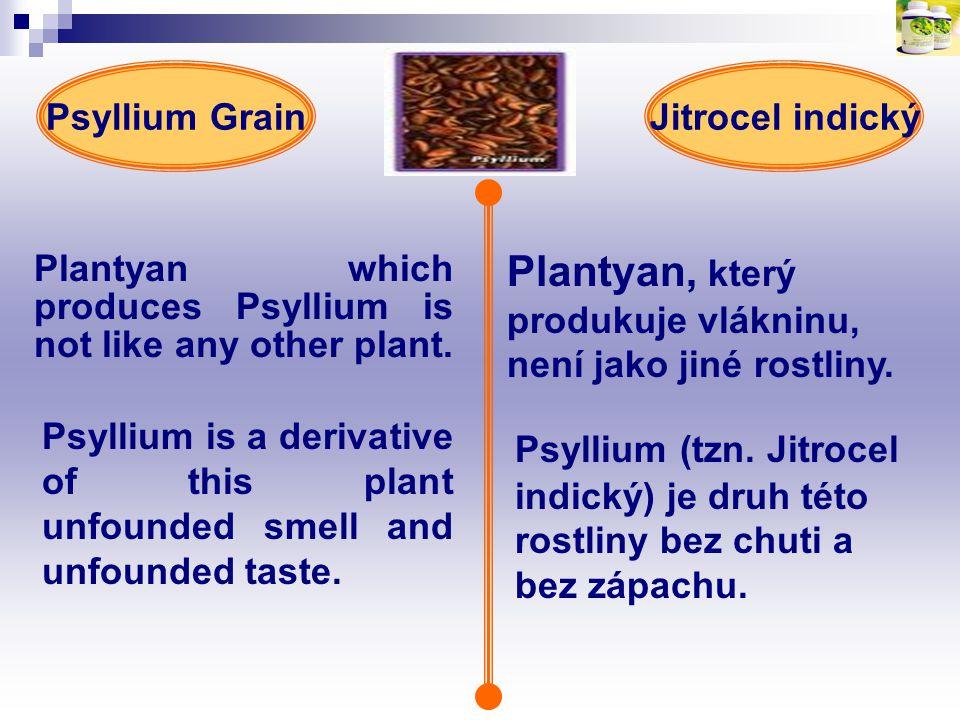 Plantyan which produces Psyllium is not like any other plant. Plantyan, který produkuje vlákninu, není jako jiné rostliny. Jitrocel indickýPsyllium Gr