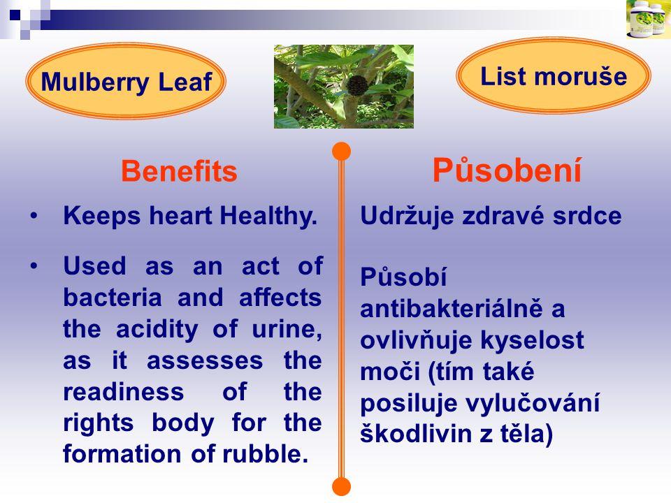 Působení Benefits Keeps heart Healthy.Udržuje zdravé srdce Mulberry Leaf List moruše Působí antibakteriálně a ovlivňuje kyselost moči (tím také posilu
