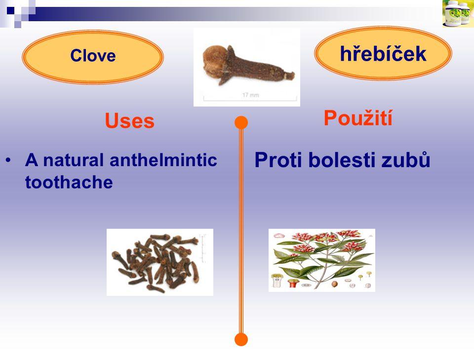 Použití Uses Proti bolesti zubů hřebíček A natural anthelmintic toothache Clove