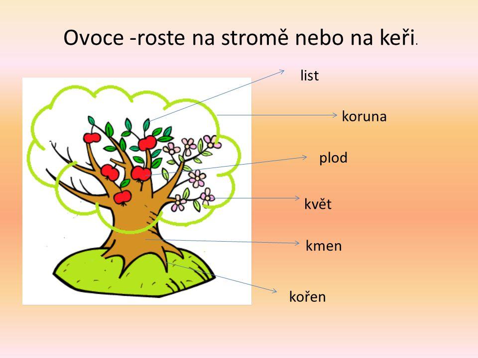 Ovoce -roste na stromě nebo na keři. list koruna plod květ kmen kořen
