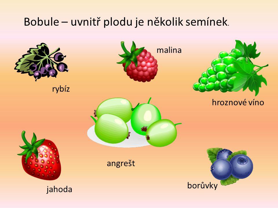 Bobule – uvnitř plodu je několik semínek. rybíz malina hroznové víno jahoda angrešt borůvky