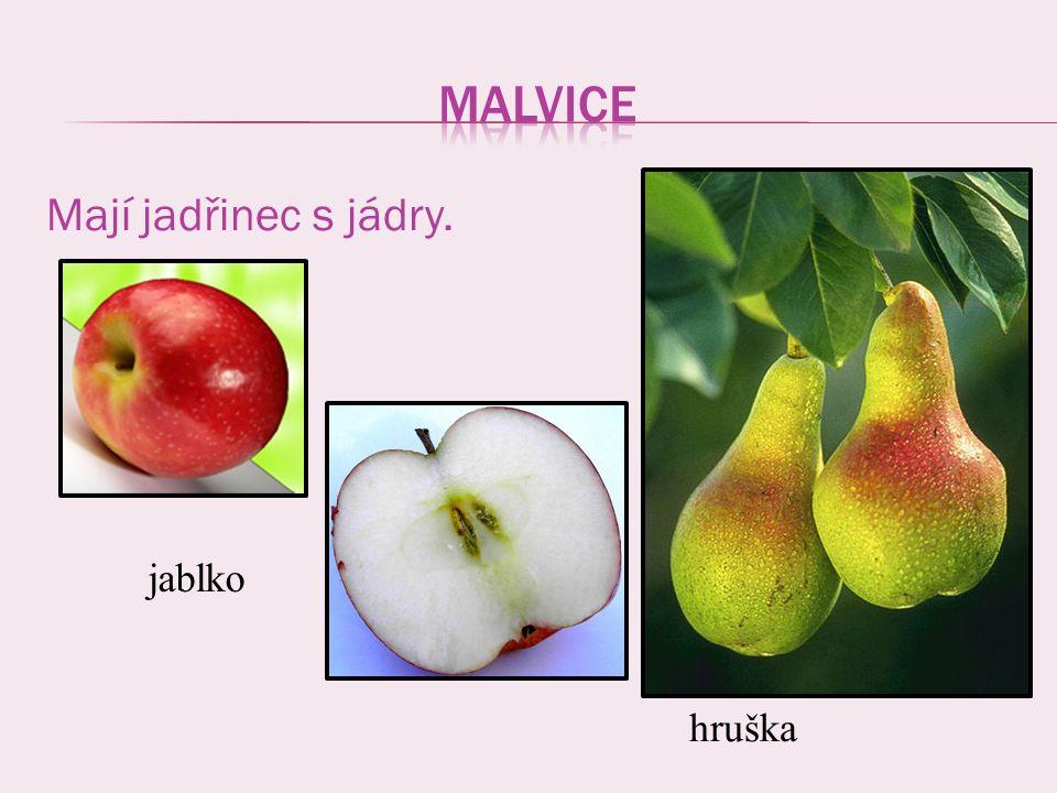 Mají jadřinec s jádry. jablko hruška