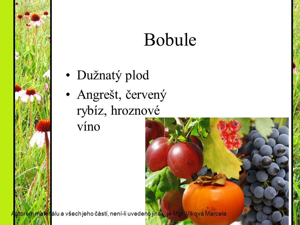 Bobule Dužnatý plod Angrešt, červený rybíz, hroznové víno Autorem materiálu a všech jeho částí, není-li uvedeno jinak, je Mgr. Vlková Marcela
