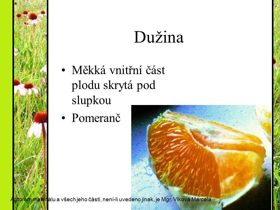Dužina Měkká vnitřní část plodu skrytá pod slupkou Pomeranč Autorem materiálu a všech jeho částí, není-li uvedeno jinak, je Mgr. Vlková Marcela