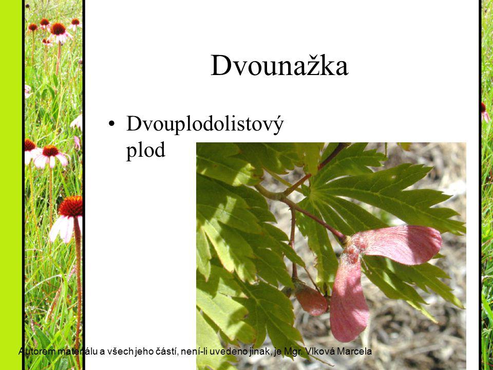 Dvounažka Dvouplodolistový plod Autorem materiálu a všech jeho částí, není-li uvedeno jinak, je Mgr. Vlková Marcela