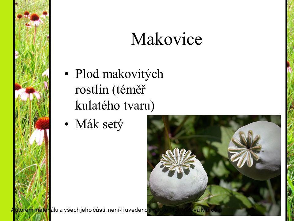 Makovice Plod makovitých rostlin (téměř kulatého tvaru) Mák setý Autorem materiálu a všech jeho částí, není-li uvedeno jinak, je Mgr. Vlková Marcela
