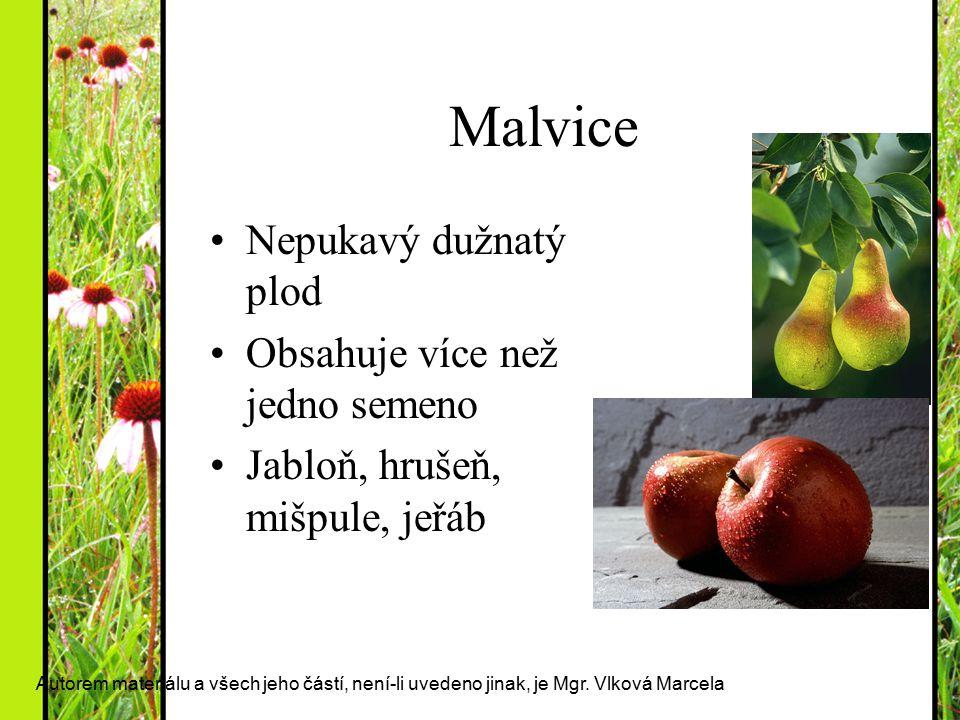 Malvice Nepukavý dužnatý plod Obsahuje více než jedno semeno Jabloň, hrušeň, mišpule, jeřáb Autorem materiálu a všech jeho částí, není-li uvedeno jina