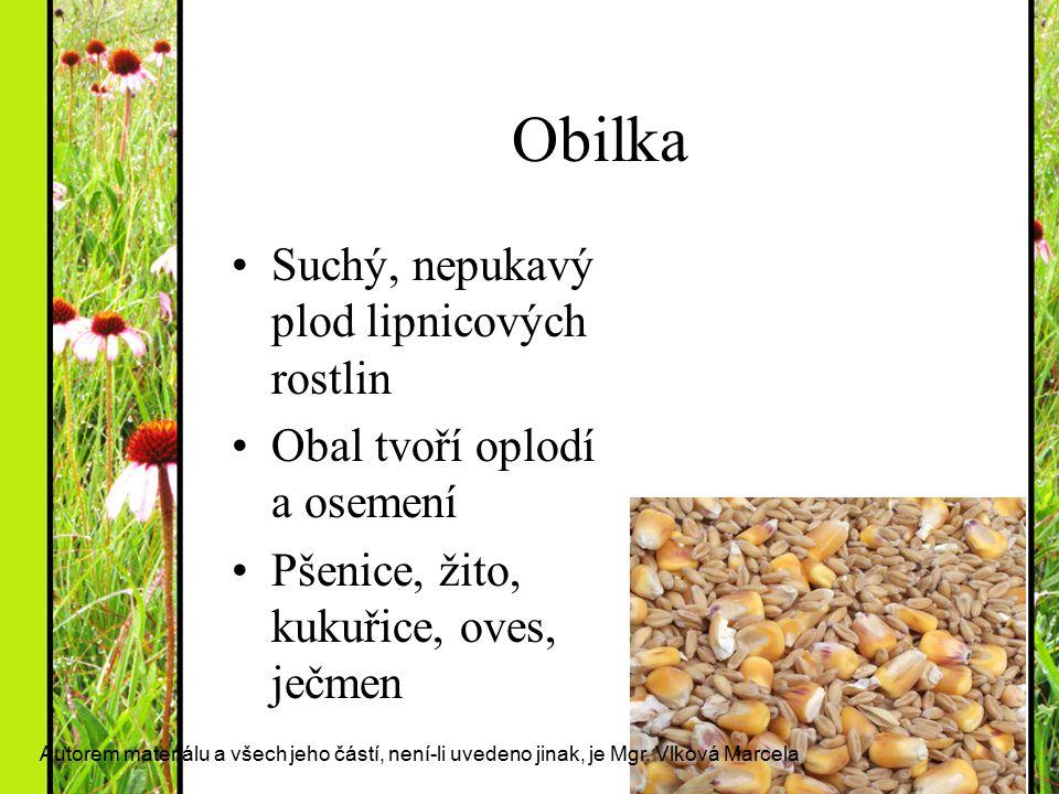 Obilka Suchý, nepukavý plod lipnicových rostlin Obal tvoří oplodí a osemení Pšenice, žito, kukuřice, oves, ječmen Autorem materiálu a všech jeho částí
