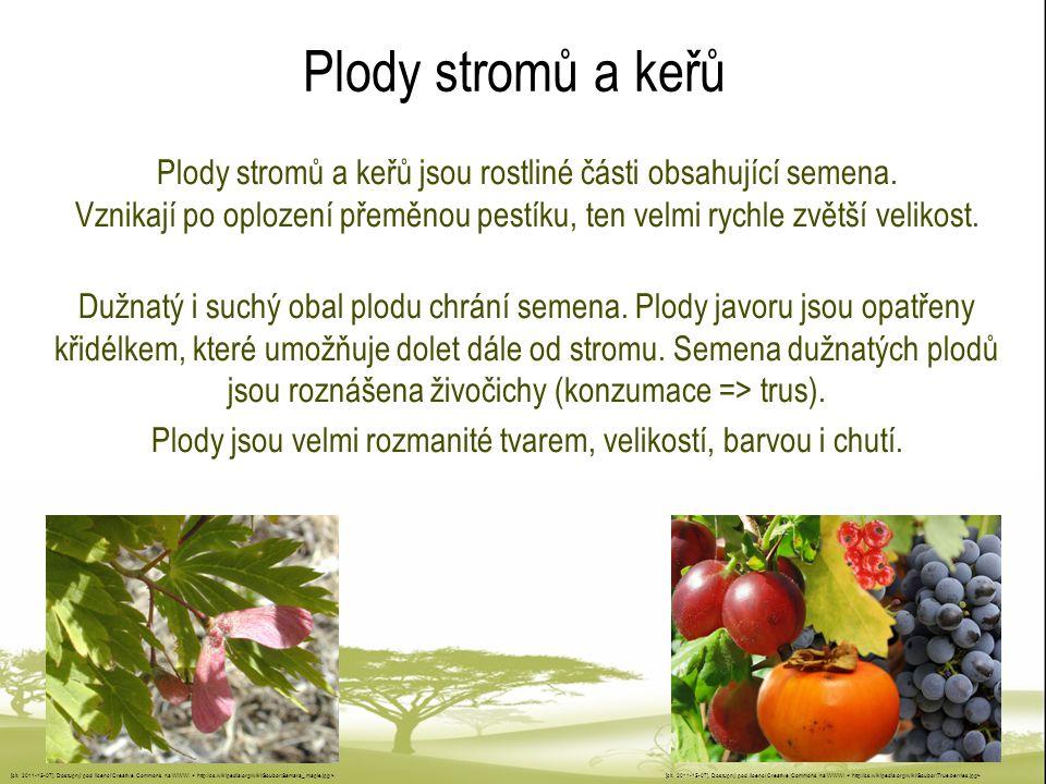 Plody stromů a keřů Plody stromů a keřů jsou rostliné části obsahující semena. Vznikají po oplození přeměnou pestíku, ten velmi rychle zvětší velikost
