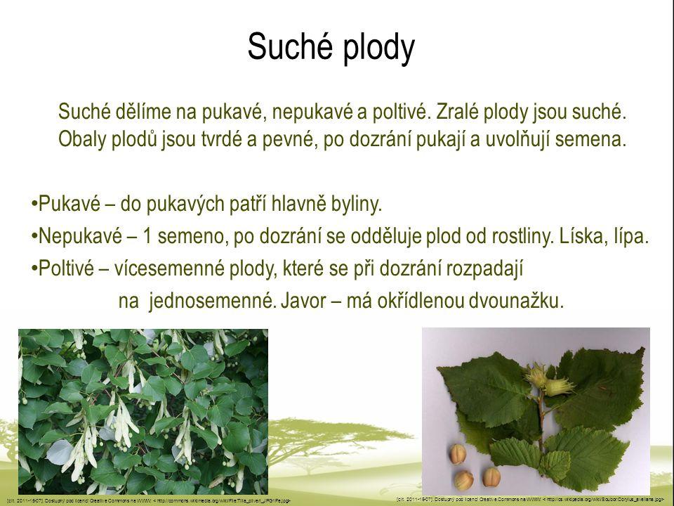 Suché plody Suché dělíme na pukavé, nepukavé a poltivé. Zralé plody jsou suché. Obaly plodů jsou tvrdé a pevné, po dozrání pukají a uvolňují semena. P