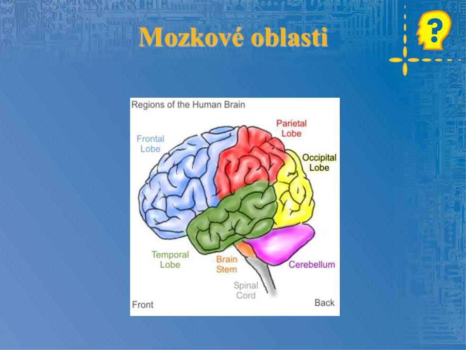 Mozkové oblasti