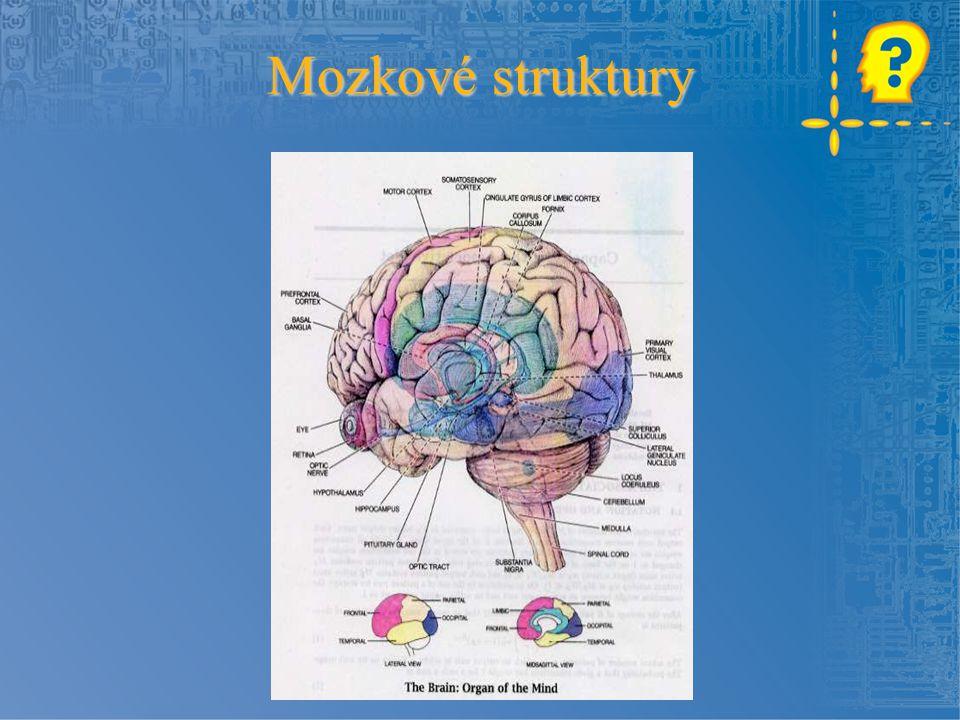 Mozkové struktury