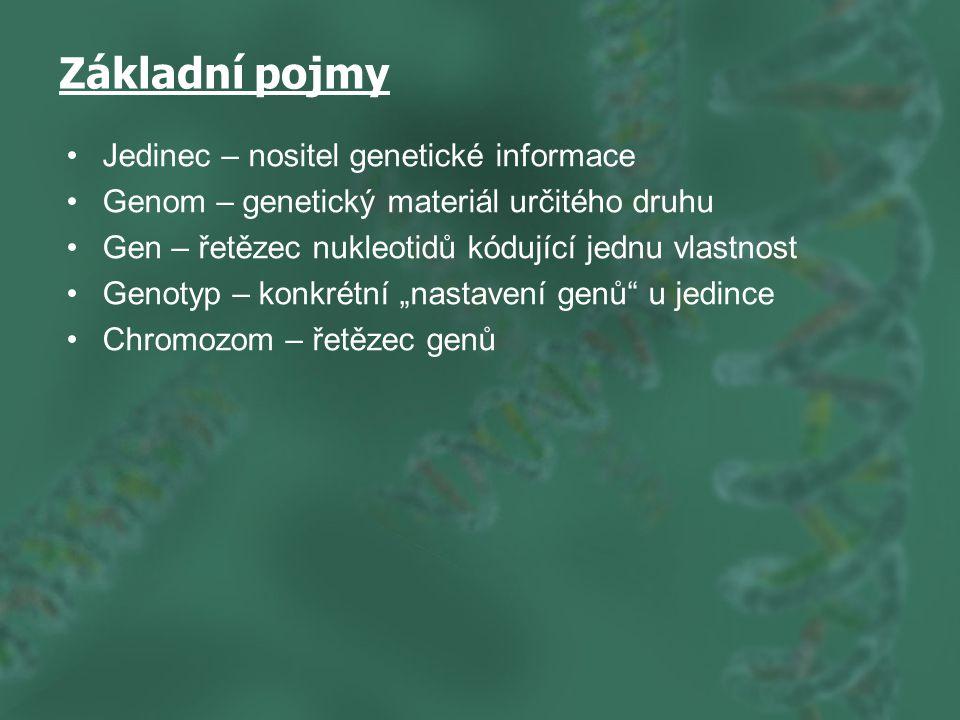 """Základní pojmy Jedinec – nositel genetické informace Genom – genetický materiál určitého druhu Gen – řetězec nukleotidů kódující jednu vlastnost Genotyp – konkrétní """"nastavení genů u jedince Chromozom – řetězec genů"""