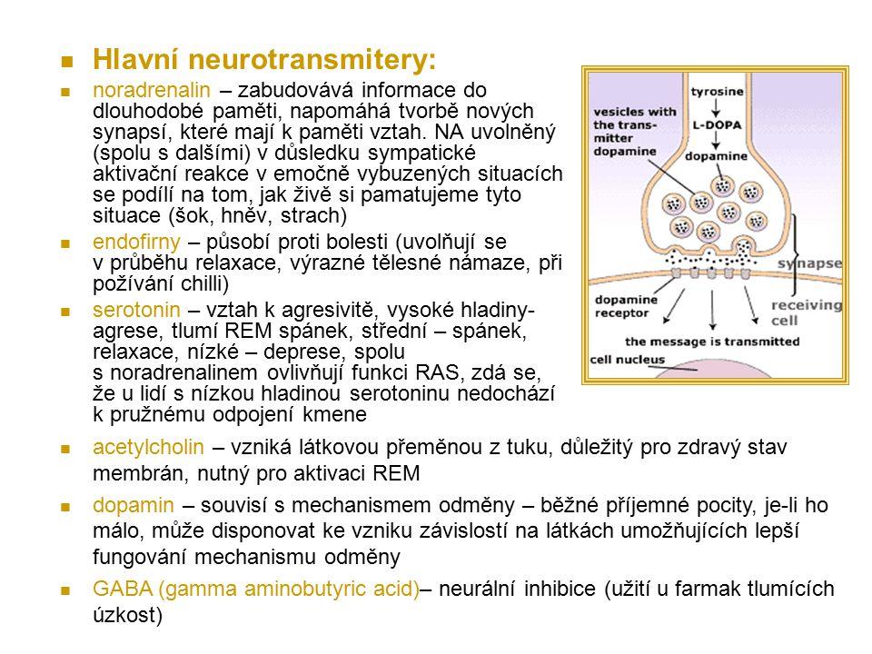Hlavní neurotransmitery: noradrenalin – zabudovává informace do dlouhodobé paměti, napomáhá tvorbě nových synapsí, které mají k paměti vztah. NA uvoln
