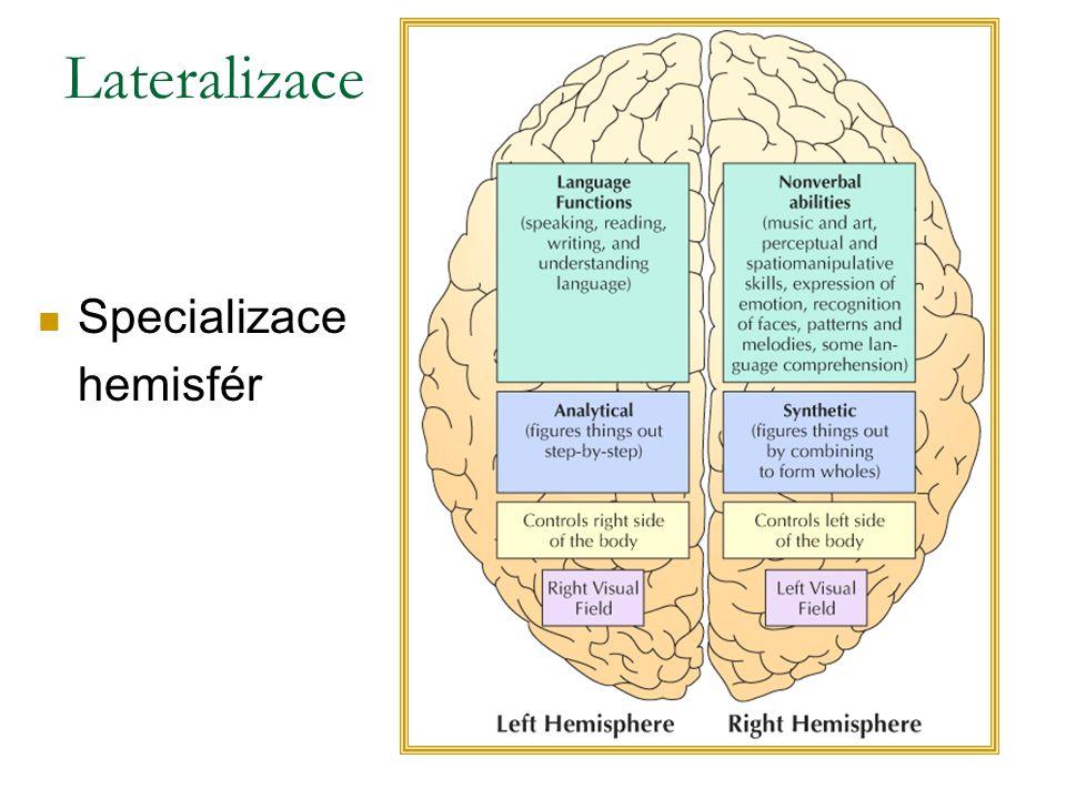 Lateralizace Specializace hemisfér