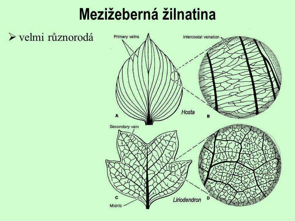 Evoluce listů a listové žilnatiny krytosemenných rostlin  Primitivní jsou s největší pravděpodobností *poměrně velké jednoduché a celokrajné listy s brochidodromní základní žilnatinou a mezižeberní žilnatinou málo diferencovanou a nepravidelnou *malé jednoduché listy s pochvovitými bázemi a akrodromickou žilnatinou oba typy jsou doloženy ze spodní křídy  Složené listy se objevují později (avšak již také ve spodní křídě)