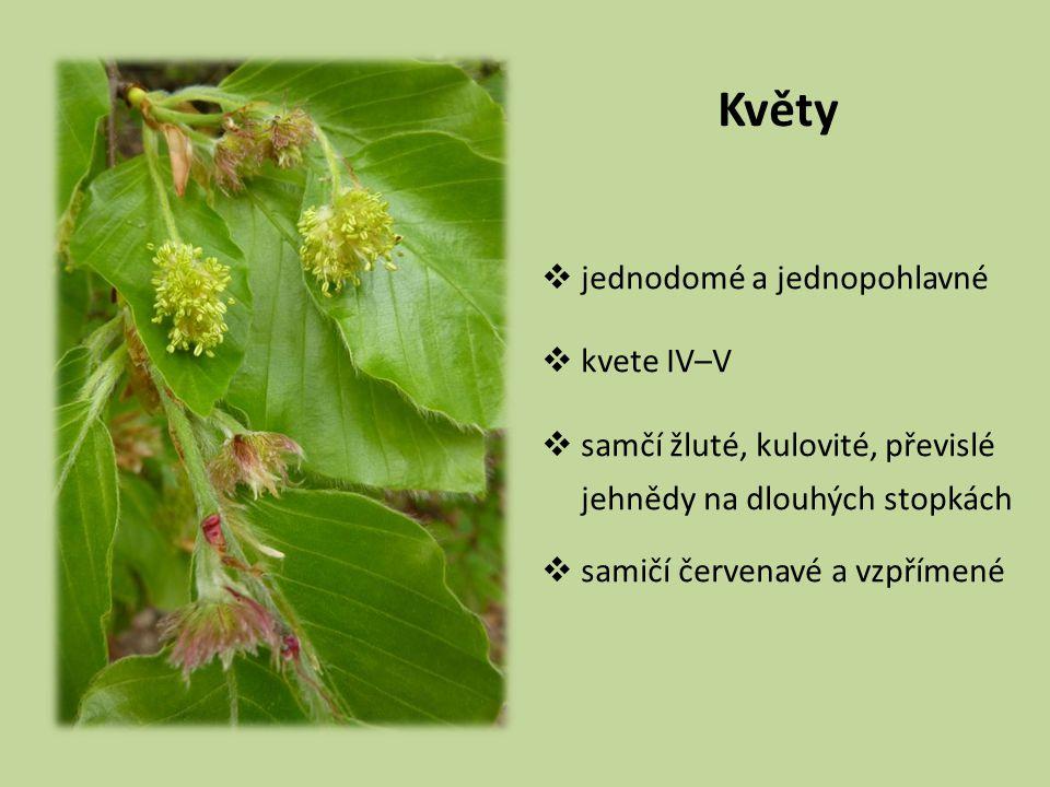 Květy  jednodomé a jednopohlavné  kvete IV–V  samčí žluté, kulovité, převislé jehnědy na dlouhých stopkách  samičí červenavé a vzpřímené
