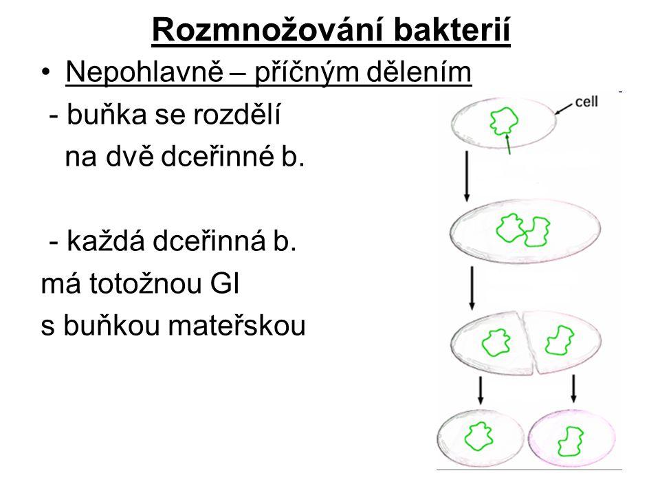 Rozmnožování bakterií Nepohlavně – příčným dělením - buňka se rozdělí na dvě dceřinné b. - každá dceřinná b. má totožnou GI s buňkou mateřskou