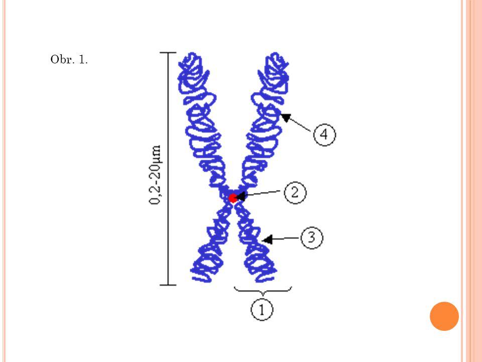 Dědičnost Je proces, ve kterém potomek (buňka nebo organismus) získává vlastnosti nebo predispozice k vlastnostem rodičovské buňky nebo organismu.