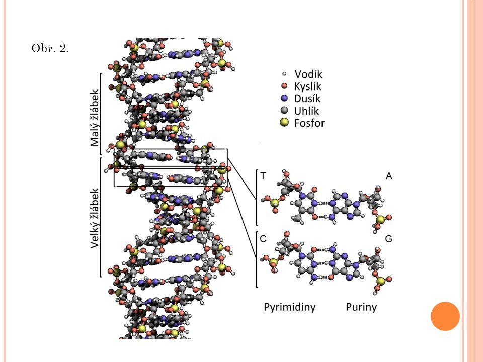 v DNA i v RNA jsou vždy čtyři druhy nukleotidů.