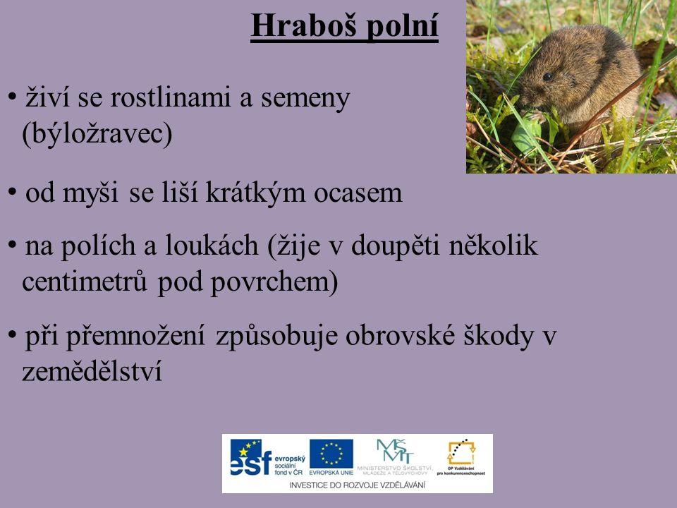 živí se rostlinami a semeny (býložravec) od myši se liší krátkým ocasem na polích a loukách (žije v doupěti několik centimetrů pod povrchem) při přemn