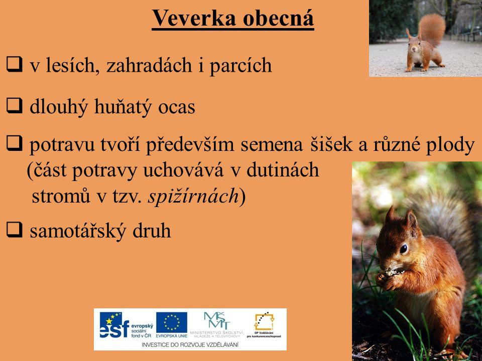 žije v lesích rychle se pohybuje, dokáže šplhat po stromech a dokáže vyskočit do výše až jednoho metru aktivní je především v noci nápadně velké ušní boltce