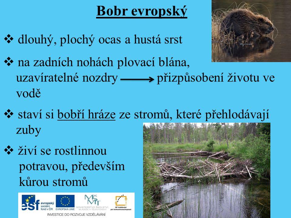 Zdroje Beaver tree.jpg.In: Wikipedia: the free encyclopedia [online].