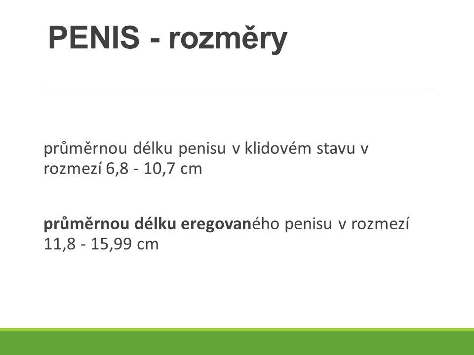 PENIS - rozměry průměrnou délku penisu v klidovém stavu v rozmezí 6,8 - 10,7 cm průměrnou délku eregovaného penisu v rozmezí 11,8 - 15,99 cm