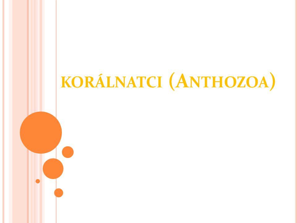 KORÁLNATCI (A NTHOZOA )
