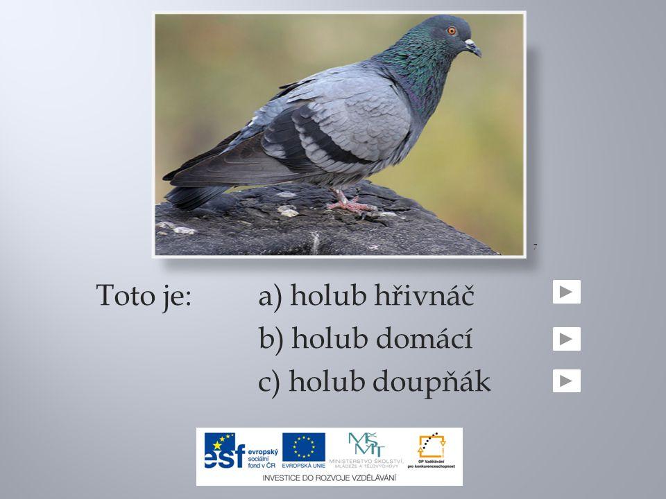 Toto je:a) holub hřivnáč b) holub domácí c) holub doupňák 7