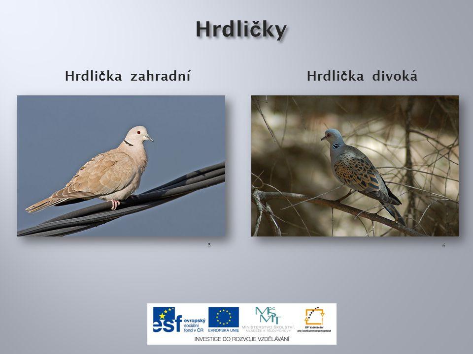 Ptáci měkkozobí se živí : a)rostlinnou i živočišnou potravou b)pouze semeny a plody c)pouze drobným hmyzem
