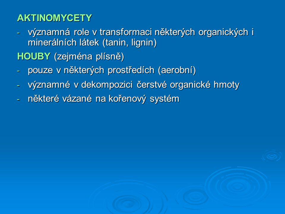 AKTINOMYCETY - významná role v transformaci některých organických i minerálních látek (tanin, lignin) HOUBY (zejména plísně) - pouze v některých pro