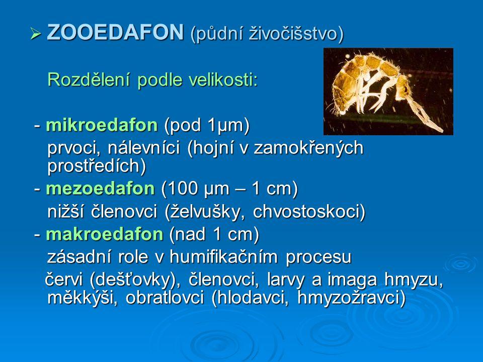 ZOOEDAFON (půdní živočišstvo) Rozdělení podle velikosti: - mikroedafon (pod 1µm) - mikroedafon (pod 1µm) prvoci, nálevníci (hojní v zamokřených p
