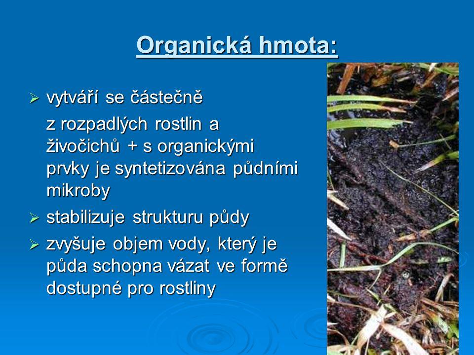 Organická hmota:  vytváří se částečně z rozpadlých rostlin a živočichů + s organickými prvky je syntetizována půdními mikroby  stabilizuje strukturu