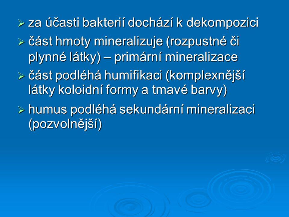  za účasti bakterií dochází k dekompozici  část hmoty mineralizuje (rozpustné či plynné látky) – primární mineralizace  část podléhá humifikaci (ko