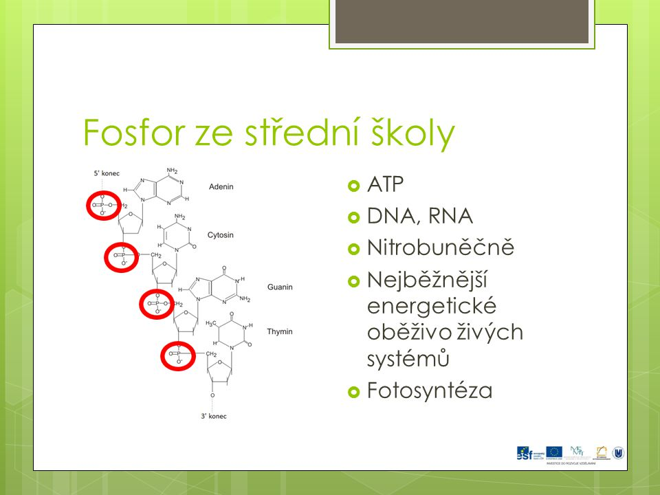 Fosfor ze střední školy  ATP  DNA, RNA  Nitrobuněčně  Nejběžnější energetické oběživo živých systémů  Fotosyntéza