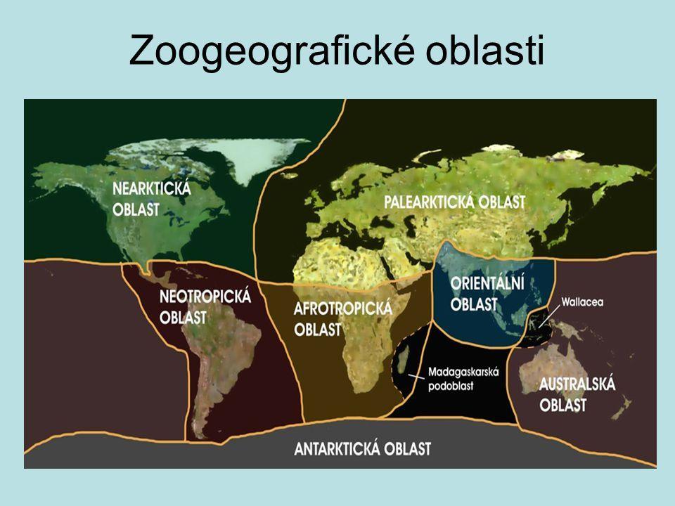  Tropické deštné lesy rovníkový pás mezi 10° s.š.