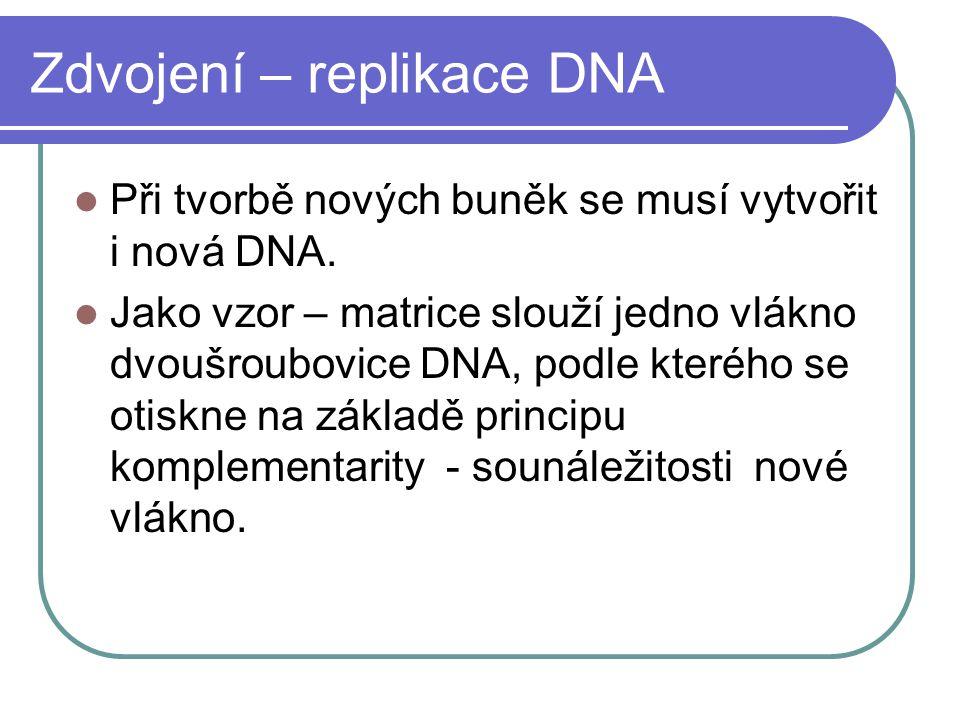 Zdvojení – replikace DNA Při tvorbě nových buněk se musí vytvořit i nová DNA.