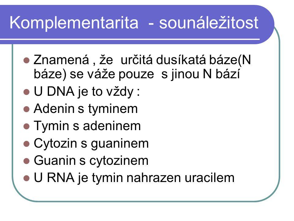 Komplementarita - sounáležitost Znamená, že určitá dusíkatá báze(N báze) se váže pouze s jinou N bází U DNA je to vždy : Adenin s tyminem Tymin s adeninem Cytozin s guaninem Guanin s cytozinem U RNA je tymin nahrazen uracilem