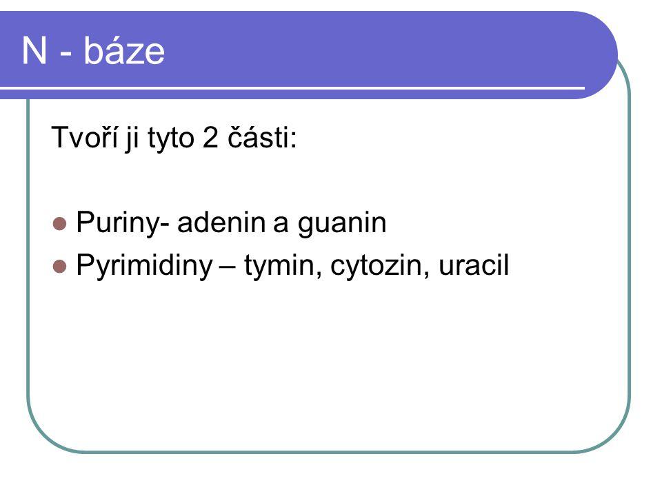N - báze Tvoří ji tyto 2 části: Puriny- adenin a guanin Pyrimidiny – tymin, cytozin, uracil