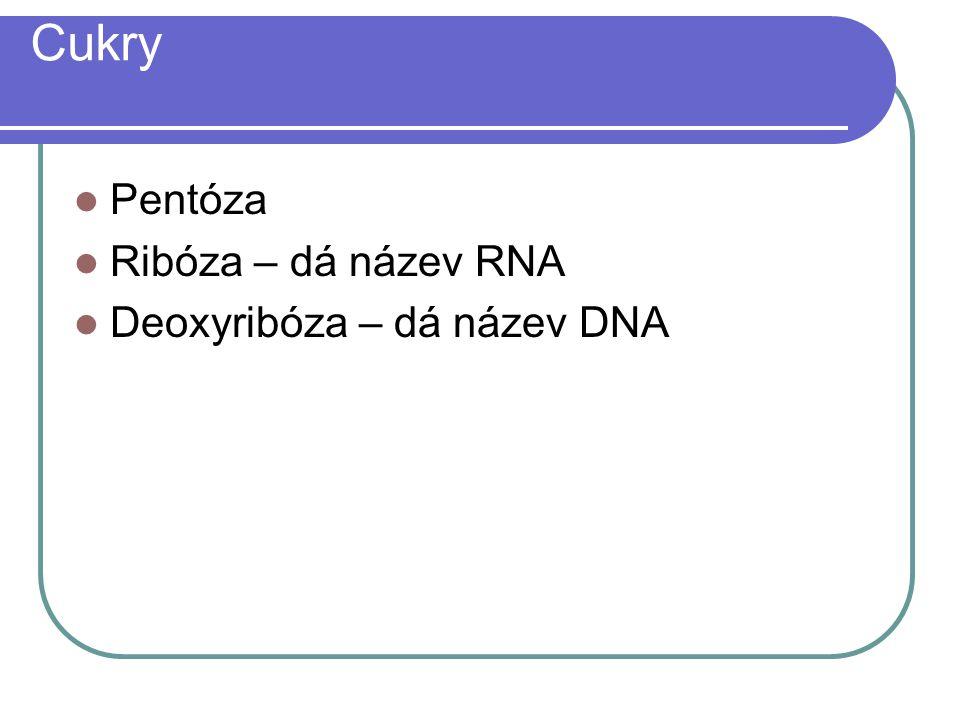 Cukry Pentóza Ribóza – dá název RNA Deoxyribóza – dá název DNA
