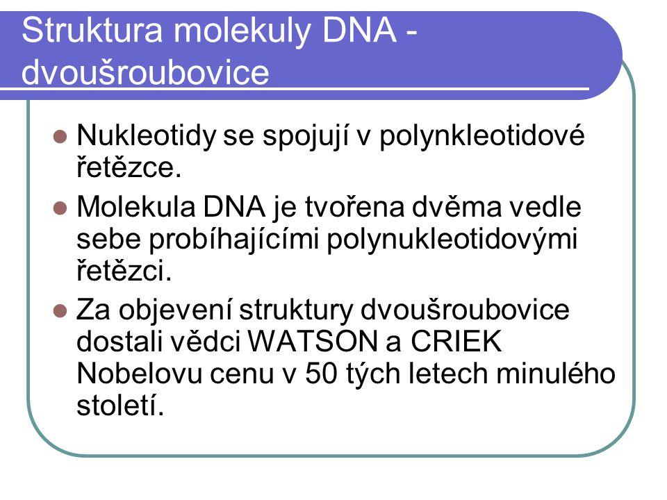 Struktura molekuly DNA - dvoušroubovice Nukleotidy se spojují v polynkleotidové řetězce.